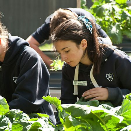 Year 7 Agriculture