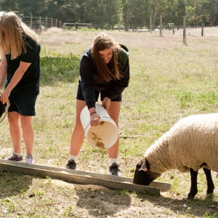 Year 8 Agriculture